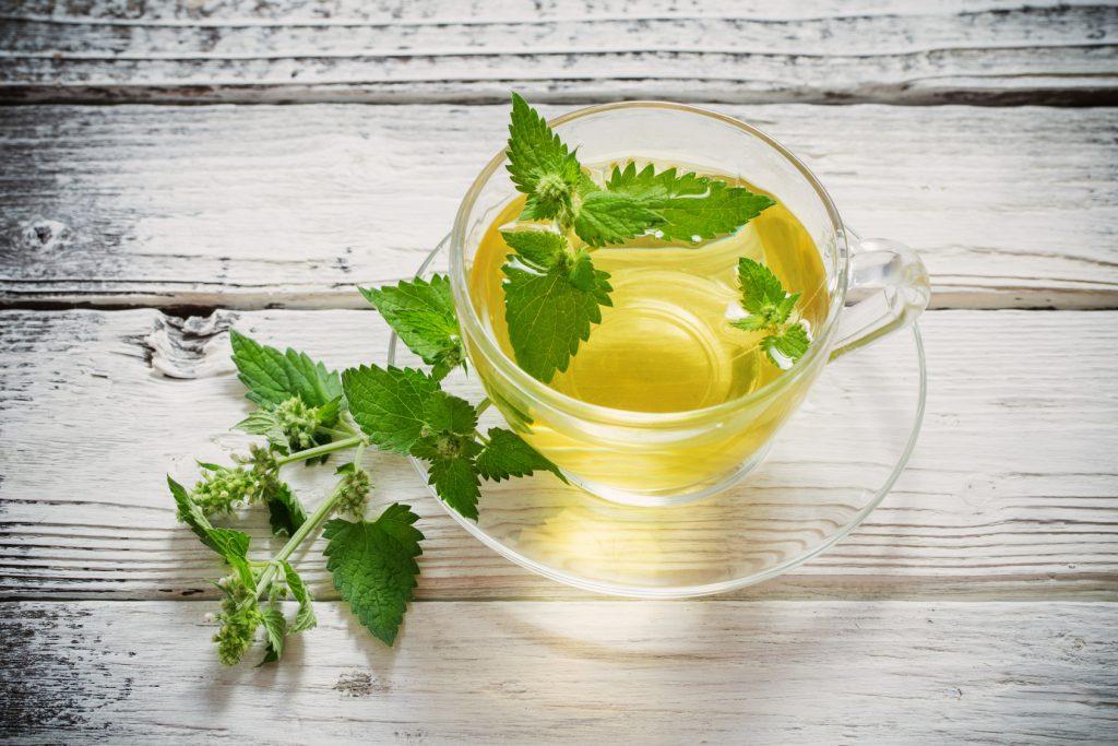 Zioła i herbaty ziołowe – właściwości: lukrecja, macierzanka, melisa, mięta, morwa biała, pokrzywa, rumianek, skrzyp polny, szałwia i truskawka